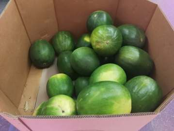 All the watermelons