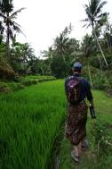 walking through the rice fields