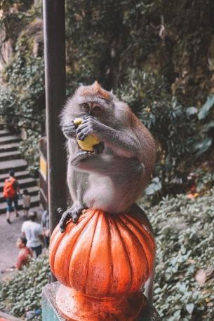 Monkey having his lunch
