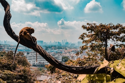 Monkey's watching over the city