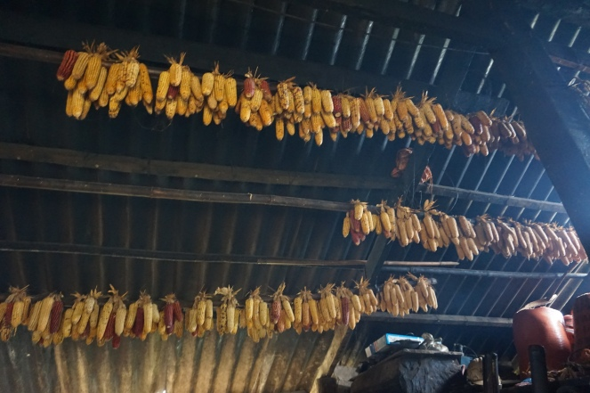 Drying corn